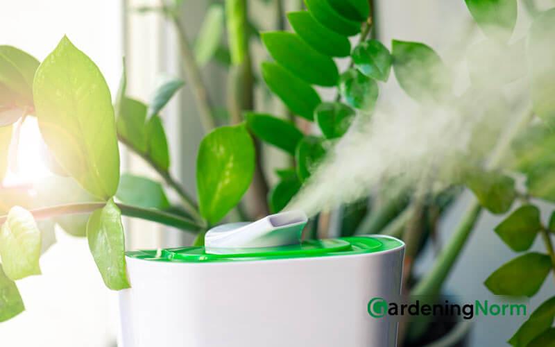 Best Humidifier for Indoor Plants