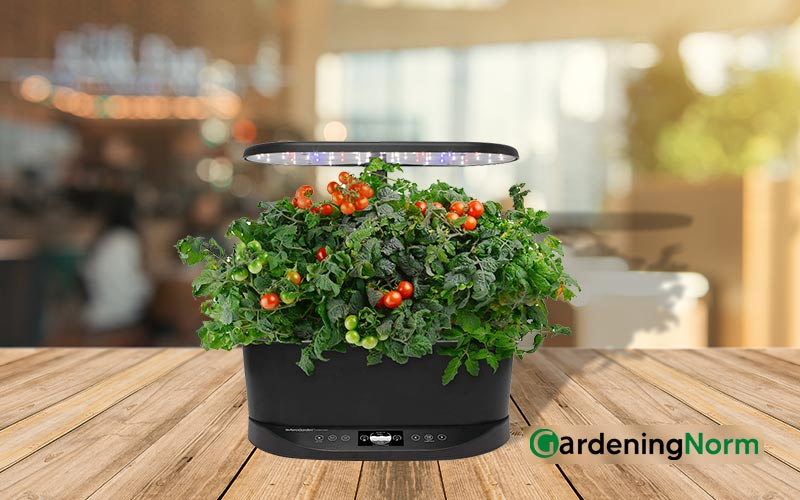 How To Clean an AeroGarden with Plants around