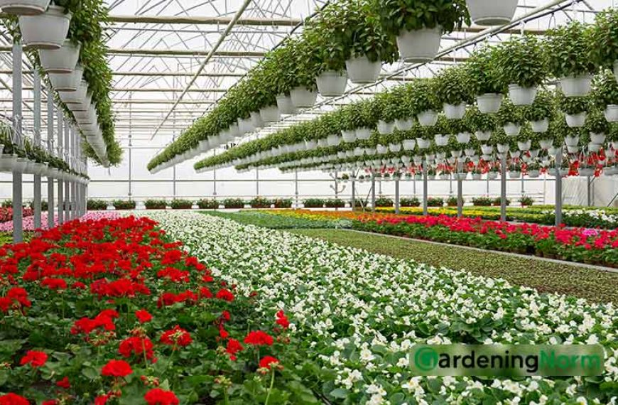 Top 8 Most Profitable Plants to Grow in Your Greenhouse