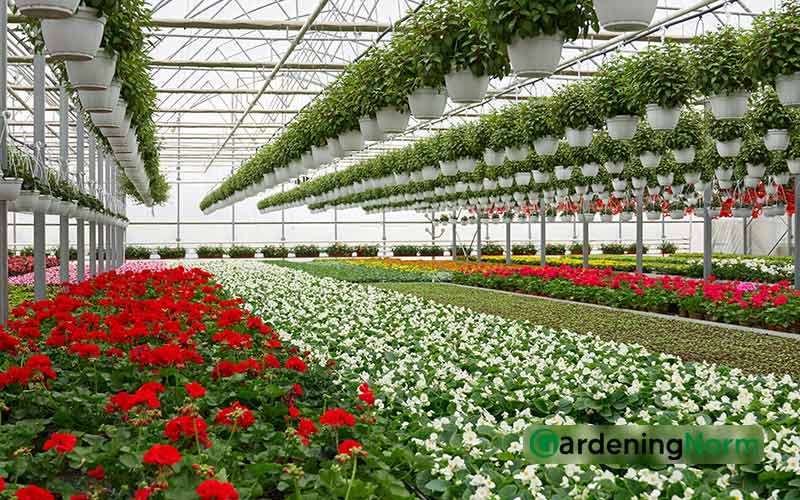 Most Profitable Plants to Grow in your Greenhouse